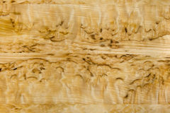 Attractive Burled Birch Wood Grain Stock Photos