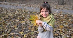 Attractive child plays with maple yellow leaf in warm scarf on open air in autumn close up stock video footage