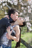 Attractive couple in blossoming park Stock Photography
