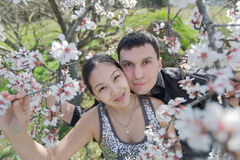Attractive couple in blossoming park Stock Image