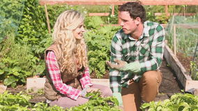 Attractive couple gardening together stock video footage