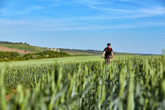 Attractive cyclist rides on the road in a field on a bright sunny day against blue sky. Stock Images
