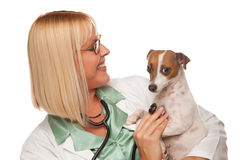 Attractive Female Doctor Veterinarian with Puppy Royalty Free Stock Photo