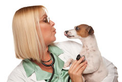 Attractive Female Doctor Veterinarian with Puppy. Attractive Female Doctor Veterinarian with Small Puppy Isolated on a White Background royalty free stock photos