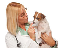 Attractive Female Doctor Veterinarian with Puppy. Attractive Female Doctor Veterinarian with Small Puppy Isolated on a White Background stock image