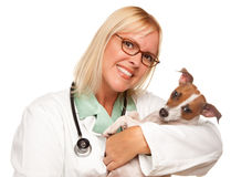 Attractive Female Doctor Veterinarian with Puppy. Attractive Female Doctor Veterinarian with Small Puppy Isolated on a White Background stock photos