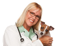 Free Attractive Female Doctor Veterinarian With Puppy Royalty Free Stock Photos - 11154488