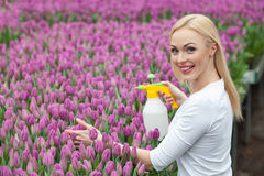 Attractive female florist is pouring the tulips Stock Photography