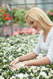 Attractive female gardener is working in shop Royalty Free Stock Photo