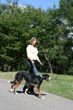Attractive Female walking Her Dog stock image