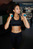 attractive fit girl dressed in sportswear working out with dumbbells Royalty Free Stock Photography