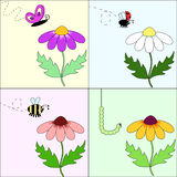 Attractive flower. A set of four  pictures with different flowers and insects Stock Photography