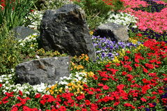 An attractive flowerbed Stock Photos