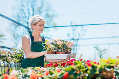 Attractive gardener selecting flowers in a gardening center. Gardening and work concept Stock Photography