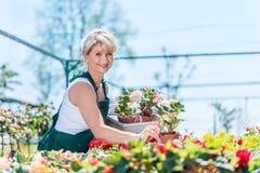 Attractive gardener selecting flowers in a gardening center. Work concept Stock Photos
