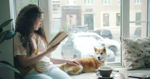 Attractive girl dog owner reading book and stroking pet on window sill in cafe. Attractive girl happy dog owner is reading book and stroking pet shiba inu puppy stock video footage