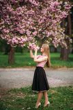 Attractive girl in dress stand in park by the blossom tree. Blond hair female. Pink tree sakura stock photo
