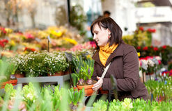 Attractive girl selecting flowers Stock Photo