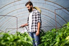 Attractive happy male farmer working in greenhouse. Attractive happy male farmer working in his greenhouse Stock Images