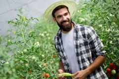 Attractive happy male farmer working in greenhouse. Attractive happy male farmer working in his greenhouse Stock Photo
