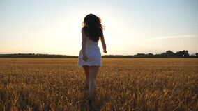 Attractive joyful woman in white dress running through field of wheat at sunset. Follow to young carefree girl enjoying