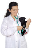 Attractive lady veterinarian Royalty Free Stock Image