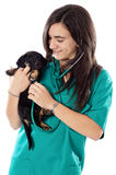 Attractive lady veterinarian Royalty Free Stock Photography