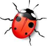 Attractive ladybird. Nice original vector insect Stock Photos