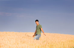 Attractive man in barley field Stock Image