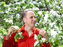 Attractive man at a blossoming apple tree Stock Photography
