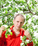 The attractive man at a blossoming apple tree Royalty Free Stock Images