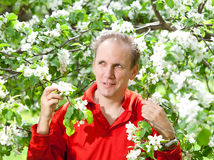 The man at a blossoming apple tree. Portrait in a sunny day Stock Photos