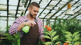 Attractive man gardener in apron watering plants and flowers with garden sprayer in greenhouse. Attractive man worker in apron watering plants and flowers with Royalty Free Stock Photography