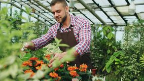 Attractive man gardener in apron watering plants and flowers with garden sprayer in greenhouse. Attractive man worker in apron watering plants and flowers with Stock Image