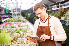 Attractive man gardener standing and using tablet. Attractive man gardener in brown apron and glasses standing and using tablet in greenhouse Stock Image