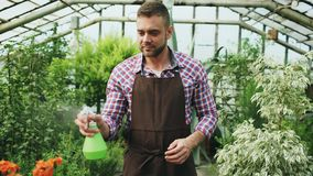 Attractive man gardener in apron watering plants and flowers with garden sprayer in greenhouse. Attractive man worker in apron watering plants and flowers with Stock Photo