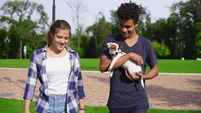 Attractive multiethnic couple walking together in park enjoying the day. African boy is holding cute little jack russell. Terrier and smiling. Happy summer time stock video