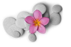 Attractive Pebbles and Flower Stock Image