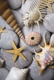 Attractive Pebbles and Seashells Royalty Free Stock Photography