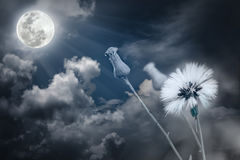 Attractive photo of flowers with full moon and moonlight in nigh Stock Photo