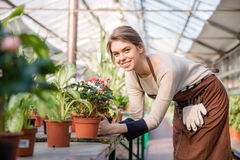 Attractive smiling young woman florist taking care of blooming begonia Stock Image