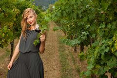 Attractive stylish woman drinking glass of red wine in vineyard Royalty Free Stock Image