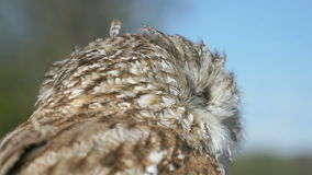 Attractive tamed owl in the city in the park. Outdoors. Close-up stock video footage