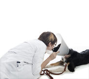 Attractive veterinarian examines dog Stock Photos