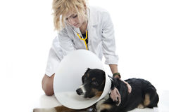 Attractive veterinarian examines dog Royalty Free Stock Photos