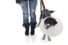 Attractive veterinarian examines dog Stock Photo