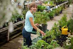 Attractive Woman in Garden Center Royalty Free Stock Photos
