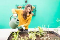Happy Woman Growing Vegetables In Her Garden. Attractive woman gardening with watering can in urban garden stock photos