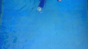 Attractive woman in a Muslim swimwear burkini swims in the pool stock video footage