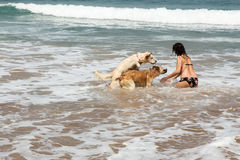 Attractive woman on seashore. Woman playing with dogs on the beach Royalty Free Stock Images